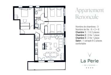Plan-renoncule-380